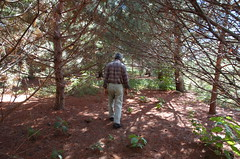 """Norm in the Magical Pine Grove <a style=""""margin-left:10px; font-size:0.8em;"""" href=""""http://www.flickr.com/photos/91915217@N00/4997188743/"""" target=""""_blank"""">@flickr</a>"""