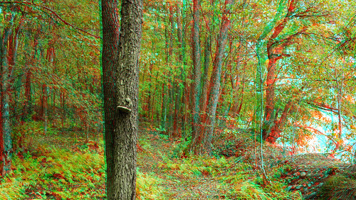 Autumn in stereo