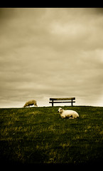 Bench, Sky & Wool (Percy M) Tags: sky grass animals clouds germany bench sheep wind air meadow northsea pellworm