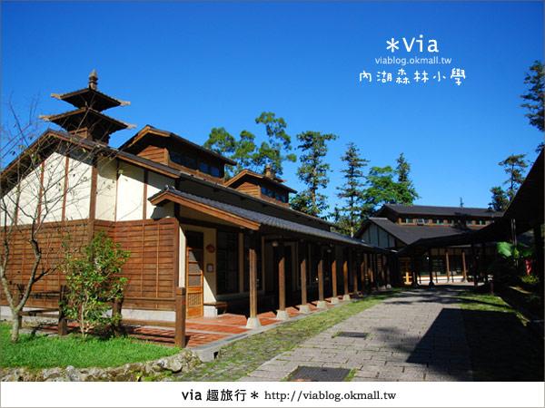 【溪頭一日遊】森林中的夢幻校園~內湖森林小學6