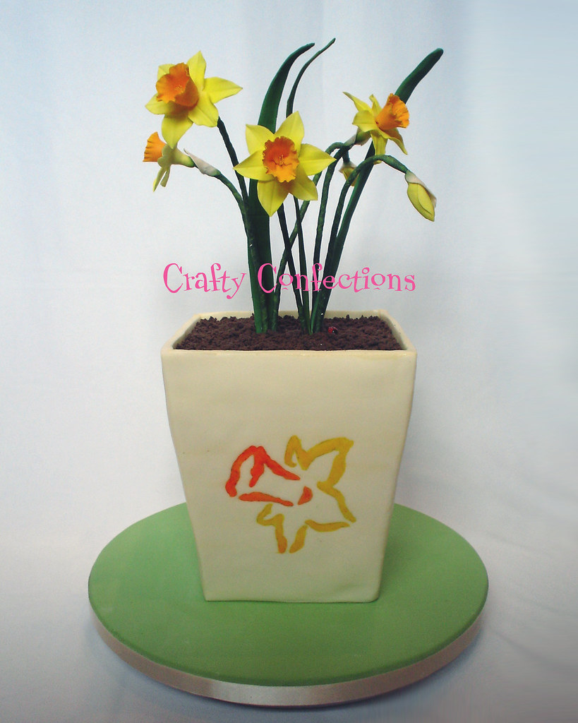 Daffodil cake for Irish Cancer Research