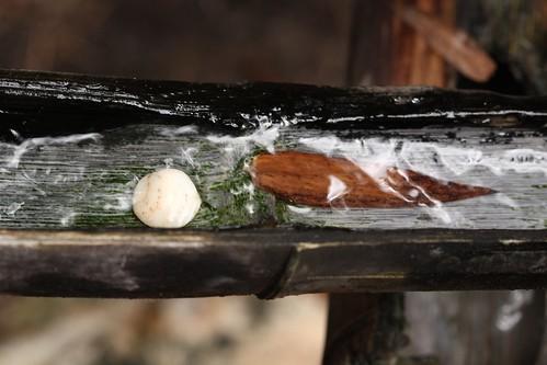 stone, leaf, and wood