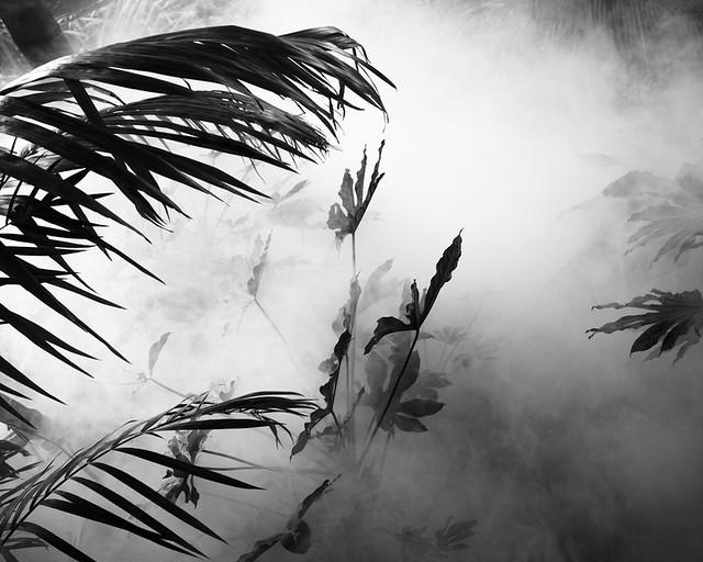 smoke&jungle_1010260
