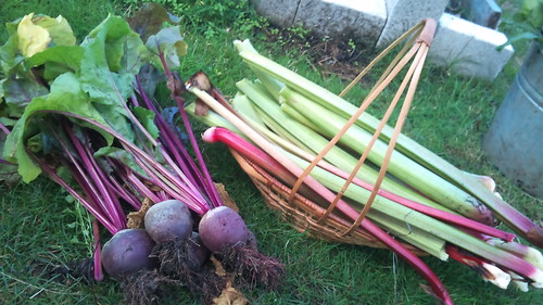 Beets and rhubarb