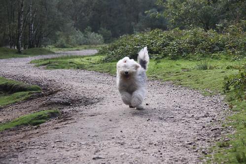 Hondenbos - 18 september 2010
