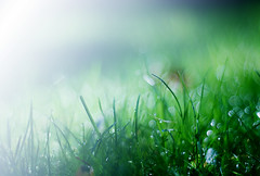 Refreshing (laurawilliams) Tags: blue cold macro green nature grass 50mm cool nikon glow bokeh gradient 18 edit 50mm18 d60 d5100