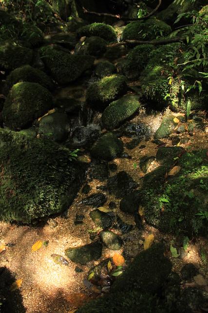 尾之間から蛇之口の滝の登山道にて in Yakushima 1