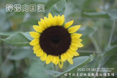 桃園觀音向陽農場20100918-024