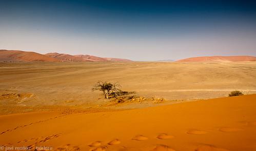 Desde la parte baja de la duna 45