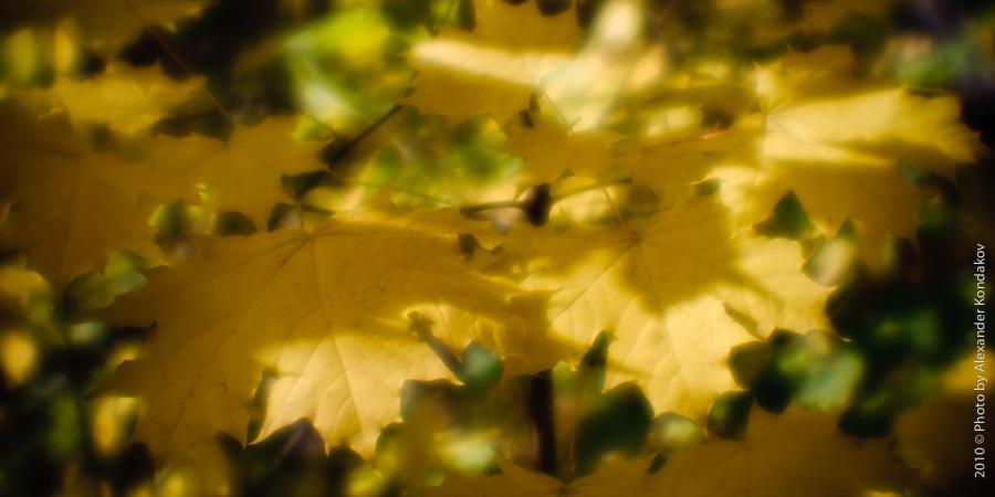 осень монокль