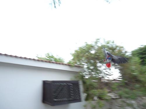 P1330009