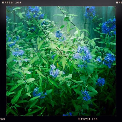 flowersinfall-0910