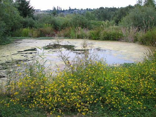 Lorna Jordan Waterworks Garden (1997)-9