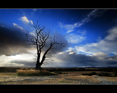 Dead Tree & God Beams - Strathmore (angus clyne) Tags: blue red summer sky cloud sun tractor tree fall beer field barley standing plane river dead golden scotland corn branch time god drink angus farm wheat farming perthshire harvest row glen tay trunk lone rays plow beams stubble clyne furrow valy strath baley colorphotoaward thesecretlifeoftrees