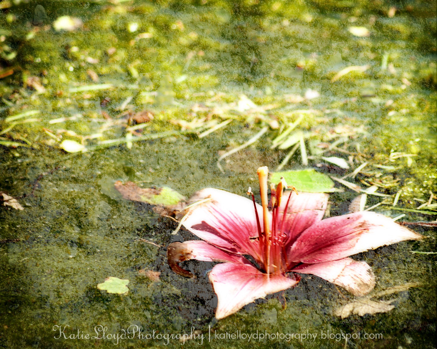 Water Lily Grunge
