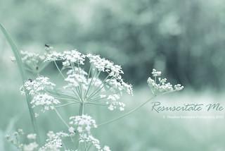 ...resuscitate this life of mine...