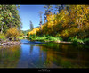 'Spring Creek' (Kevin Aker Photography) Tags: color fall southdakota blackhills creek river landscape interestingness interesting fallcolor scenic explore springcreek explored sceniclandscape awesomelandscape awesomephotography blackhillsofsouthdakota kevinaker kevinakerphotography beutifulphotography