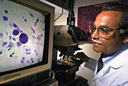 J.P. Dubey examines T. gondii parasites in swine tissue.