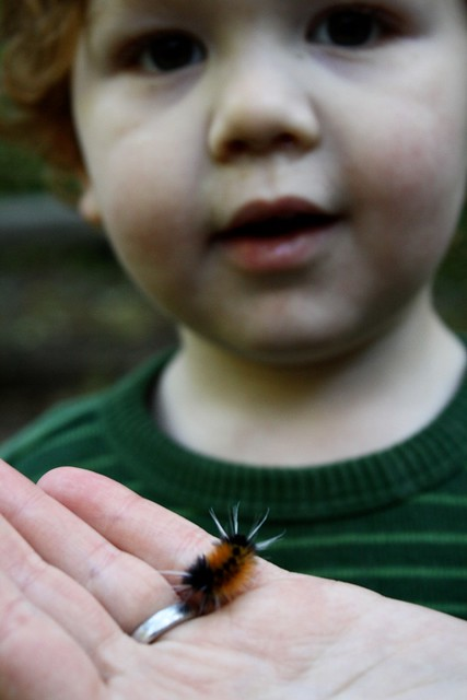 oregon woolly bear