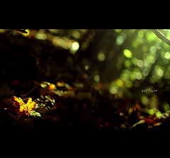 Bokeh catcher... (artore) Tags: autumn trees green forest leaf bokeh ground catcher