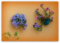 Msica de pared en Re menor (Franco DAlbao) Tags: flowers flores wall pared lumix decoration flowerpot decoracin tiestos leicalens dalbao francodalbao