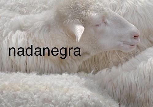 nadanegra