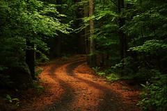 [フリー画像] 自然・風景, 森林, 道, アメリカ合衆国, 201010091300