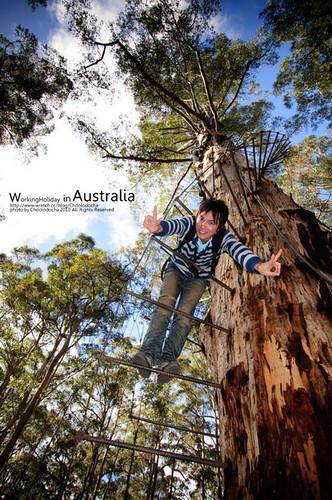西南澳177