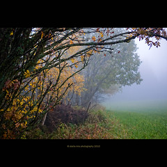 Melancholia (stella-mia) Tags: autumn mist fall rain norway misty fog forest lumix haze tears mood sad foggy panasonic explore rainy 20mm hazy frontpage depretion melancholia gf1 explored dmcgf1 rainywheather annakrmcke