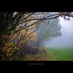 Melancholia (stella-mia) Tags: autumn mist fall rain norway misty fog forest lumix haze tears mood sad foggy panasonic explore rainy 20mm hazy frontpage depretion melancholia gf1 explored dmcgf1 rainywheather annakrmcke