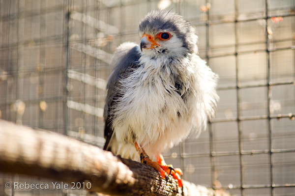 RYALE_African_Dawn_Birds_53