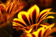 Flower Power II (NamWizard) Tags: red flower beauty yellow canon soulscapes nickolbe