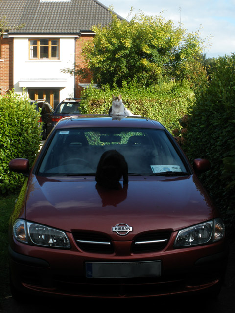 Oimo and Oscar on the car