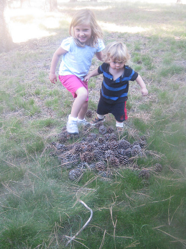 smashing pinecones