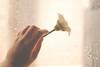 [ 3 \ 45 ] (Ebtesam.) Tags: flower rain 35mm project drops day hand 45 saudi arabia jeddah abdullah مطر ورده بيضا nikond40x ebtesam ابتسامعبدالله