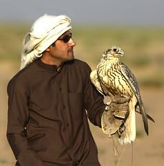 (sahoodvich) Tags: life wild bird animal sport canon fly hunting flight arab falcon kuwait ibrahim  khaled  q8                  gyer             sahoodi   alsahood sahoodvich  alhawedi