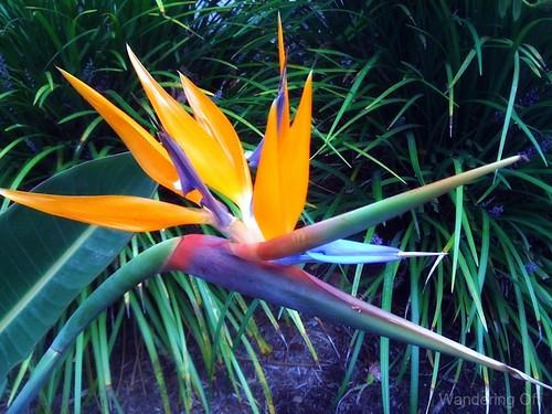 Flower at Hotel del Coronado