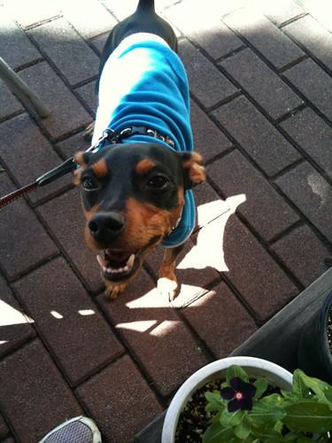 散歩を終了させて近くのパン屋さんで軽くランチ。注文して待ってるなう。黒犬はこんな感じ。