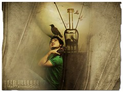 ,, (Mr7ammoOod - @MhdYsfGnm) Tags: light portrait green bird lamp curtain philosophy thinking lonely crow               mr7ammoood mrhammoud
