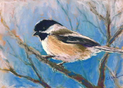 20101009_chickadee10_scan
