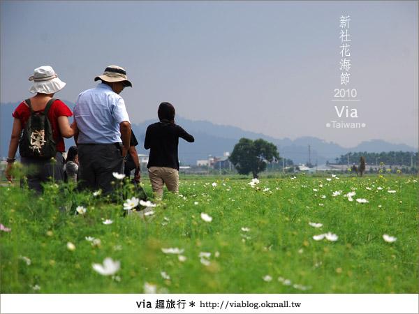 【新社花海】新社花海2010~via拍回來的最新花況8