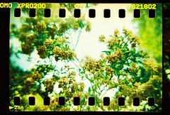 a bloomin' (golfpunkgirl) Tags: film 35mm golf xpro crossprocessed holes course dianaf exposed sprockets stokepark adaptor lomographyslide200 golflive02