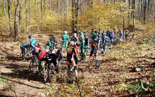 Woods gathering