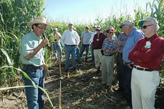 Researcher develops water-efficient corn hybrids