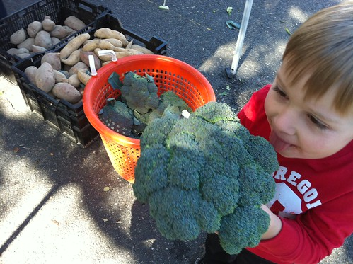 how do you test broccoli for ripeness?