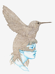 colibri (L`N`Y) Tags: portrait pen ink hummingbird drawing nib colibri chinchin