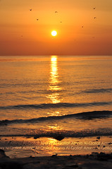 Dear Grandfather :') (Amna Al-Qallaf) Tags: sea sky orange sun beach birds sunrise nikon kuwait 2010 amna q8 amona kuw garndfather alqallaf d5000 yadee qallaf mansouralqallaf