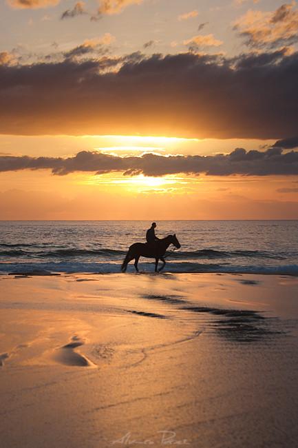Horse, sun and sea