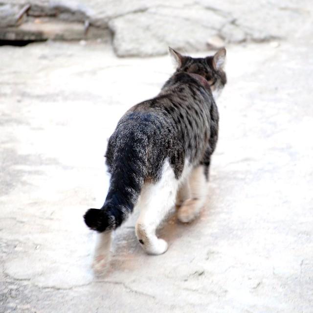 trottle cat