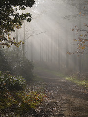 Walk in the mist (yvonnepay615) Tags: uk autumn trees mist nature woodland lumix woods path ngc norfolk panasonic sandringham g1 rays 45mm eastanglia greatphotographers magicofnature flickraward flickraward5 flickrawardgallery